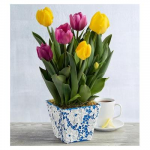 Yellow And Pink Tulip Gift
