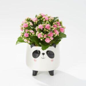 Delightful Panda Ceramic