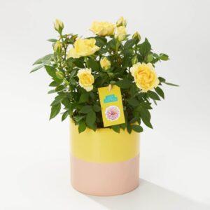 Dazzling Yellow Ceramic