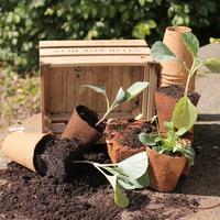 Wood Fibre Pots 8cm Pack 48
